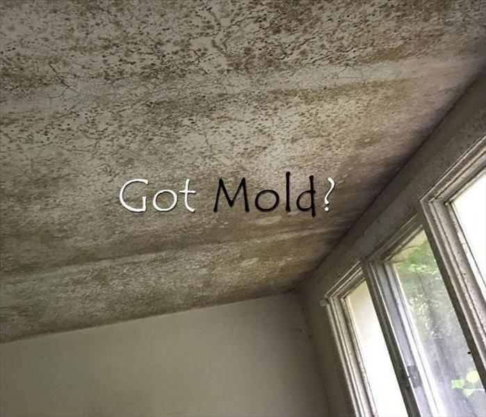 Mold Remediation Professional Mold Remediation Services in Connecticut